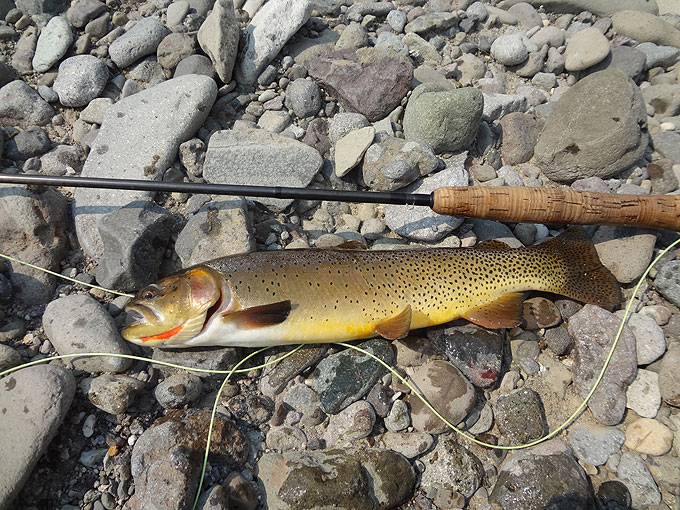 Orvis endorsed fly fishing expedition wyoming guide for Wyoming fly fishing